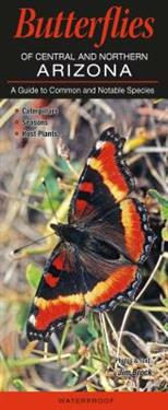 Butterflies of Central and Northern Arizona: A Guide to Common and Notable Species