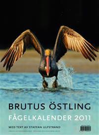 Fågelkalender 2011