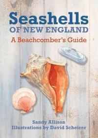 Seashells of New England