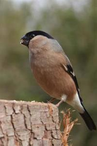Female Bullfinch on a Stump Journal: 150 Page Lined Notebook/Diary