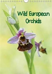 Wild European Orchids 2017