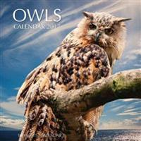 Owls Calendar 2017: 16 Month Calendar