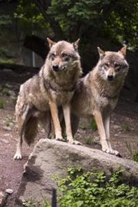 Two European Wolves Animal Journal: 150 Page Lined Notebook/Diary