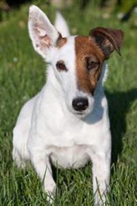 Fox Terrier Dog Journal: 150 Page Lined Notebook/Diary