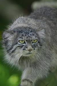 Pallas Cat Manul Journal: 150 Page Lined Notebook/Diary