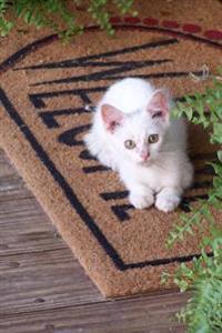 White Kitten Sitting on a Welcome Mat Journal: 150 Page Lined Notebook/Diary