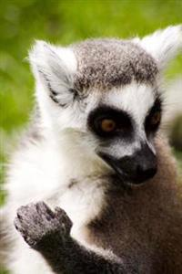 Ring-Tailed Lemur Portrait Journal: 150 Page Lined Notebook/Diary
