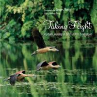 Taking Flight: A Photo Journey of Birds Across Singapore