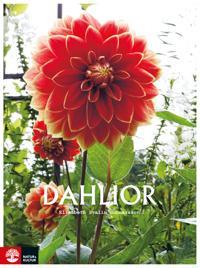 Dahlior