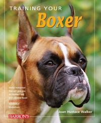 Training Your Boxer