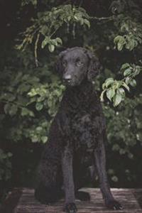 Curly-Coated Retriever: Artified Pets Journal/Notebook/Diary 160 Pages