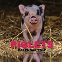 Piglets Calendar 2017: 16 Month Calendar