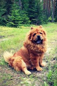 Chow Chow: Artified Pets Journal/Notebook/Diary 160 Pages