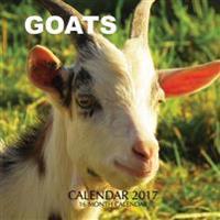 Goats Calendar 2017: 16 Month Calendar