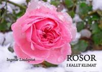 Rosor i kallt klimat