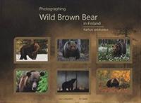 Photographing Wild Brown Bear in Finland - Karhun valokuvaus