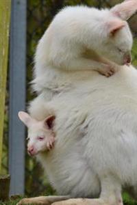 Sweet Mom and Baby Albino Wallaby and Joey Animal Journal: 150 Page Lined Notebook/Diary