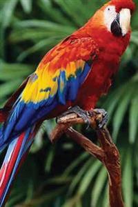 Journal: Parrot