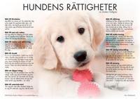 Hundens rättigheter - poster