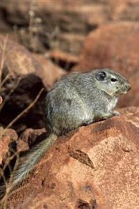 Dassie Rat Procavia Capensis Cape Hyrax African Animal Journal: 150 Page Lined Notebook/Diary
