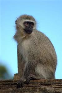A Vervet Monkey (Chlorocebus Pygerythrus) in a Game Park in South Africa Journal: 150 Page Lined Notebook/Diary