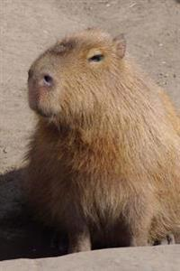 Cute Capybara Close Up Portrait Animal Journal: 150 Page Lined Notebook/Diary