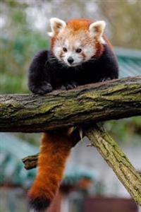 Mind Blowing Cute Little Red Panda 150 Page Lined Journal: 150 Page Lined Journal