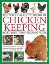 The Practical Encyclopedia of Chicken Keeping: Breed Identifier - Rearing - Care