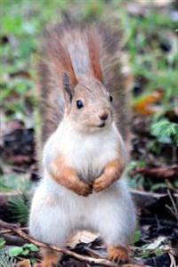 Inquisitive Red Squirrel in the Park Journal: 150 Page Lined Notebook/Diary