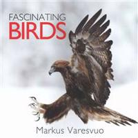 Fascinating Birds