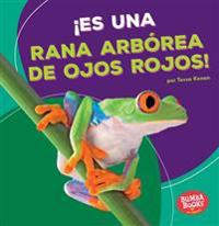 ¡es Una Rana Arbórea de Ojos Rojos! (It's a Red-Eyed Tree Frog!)