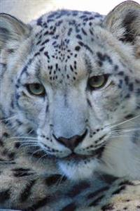 Such a Sweet Face! Snow Leopard Big Cat Journal: 150 Page Lined Notebook/Diary