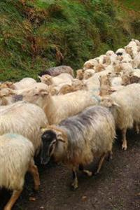 A Herd of Sheep Walking Along a Country Lane Journal: 150 Page Lined Notebook/Diary