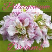 Pelargonium Dreams 2018