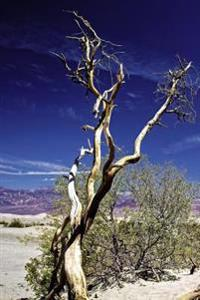 A View of a Gnarled Tree in the Desert in Death Valley Journal: 150 Page Lined Notebook/Diary