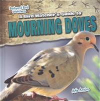 A Bird Watcher's Guide to Mourning Doves