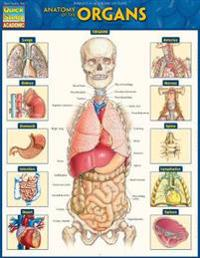 Anatomy of the Organs: Quickstudy Laminated Reference Guide