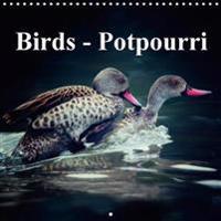Birds - Potpourri 2018
