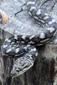 Carpet Python Journal