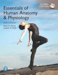 Essentials of Human AnatomyPhysiology, Global Edition