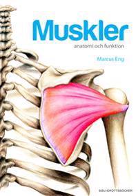 Muskler anatomi och funktion