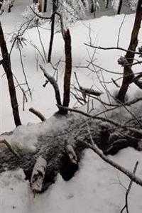 Winter Season Journal Snow Scene: (Notebook, Diary, Blank Book)