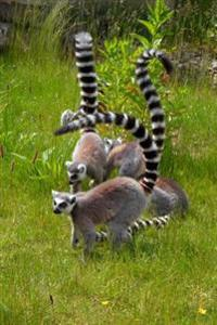 A Conspiracy of Black and White Ring-Tailed Lemurs Journal: 150 Page Lined Notebook/Diary