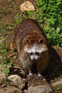 Raccoon Out Foraging Journal: Take Notes, Write Down Memories in This 150 Page Lined Journal