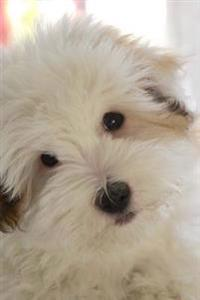Cuddly White Coton de Tulear Puppy Dog Journal: 150 Page Lined Notebook/Diary