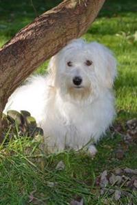 Silky White Adult Coton de Tulear Dog in the Park Journal: 150 Page Lined Notebook/Diary
