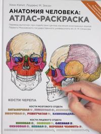 Anatomija cheloveka: atlas-raskraska