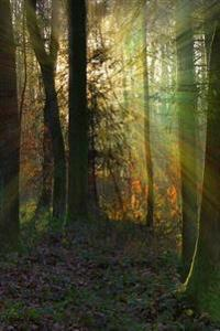 Sunbeams in the Forest Journal: 150 Page Lined Notebook/Diary