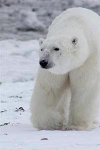 Magnificent White Polar Bear on Snow Covered Drift Ice Svalbad Norway Journal: 150 Page Lined Notebook/Diary