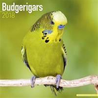 Budgerigars Calendar 2018